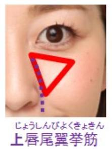 エステプロCⅡで上唇鼻翼挙筋も鍛えて頬を高くすれば若く見える